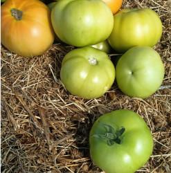 Organik Yeşil Domates 0.5kg