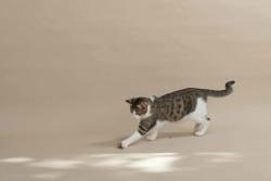 Kedi Oyun Seti