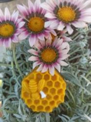 Arı Peteği Bal Mumu Mum
